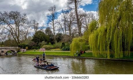 Cambridge, Cambridgeshire, United Kingdom - April 8, 2016. Tourist punting at river Cam on a bright sunny day, Cambridge, Cambridgeshire, United Kingdom
