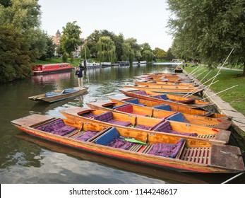 Cambridge, England, UK - August 19, 2017: A boater moors a traditional punt among a cluster of the iconic boats on the riverbank of the Cam in Cambridge.