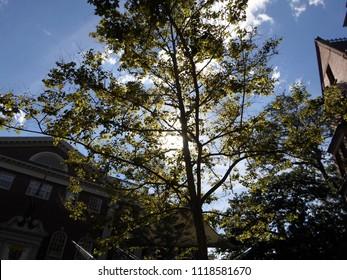 Cambridge, Massachusetts / USA - June 22 2018: Historic Lehman Dudley House (left) and Straus Hall (right) inside Harvard Yard of Harvard University