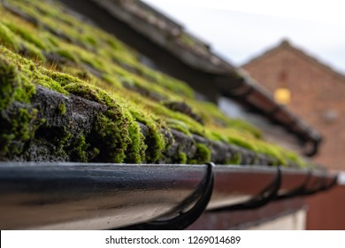 Cambridge, UK - Circa December 2018: Close-up, shallow focus of a build up of roof moss seen adjacent to house guttering. The moss is about to be removed and the guttering cleared of the moss build up