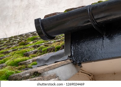 Cambridge, UK - Circa December 2018: Shallow focus of moss seen on a south facing roof on an old cottage. A near gutter can be seen which is fully of moss and is due to be cleaned, as is the roof.