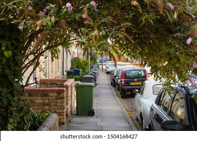 Cambridge, UK - Circa September 2019: Unusual view of a towering shrub seen growing in an arc down a Cambridge residential street. Terraced houses and parked cars are visible in this urban view.