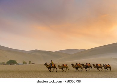 Camel caravan at Gobi desert in Dunhuang in evening time. This is a famous place part of silk road in Dunhuang, Gansu, China.