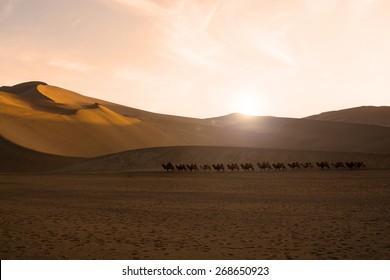 Camel caravan going through the sand dunes in the Gobi Desert, China