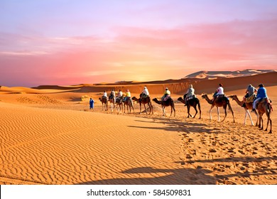 Camel caravan going through the sand dunes in the Sahara Desert, Morocco at sunset