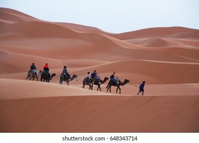 Camel caravan going through the sand dunes in the Sahara Desert, Morocco, Merzouga.