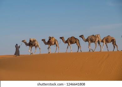 camel Caravan isolated on summit if dune in the Sahara desert landscape
