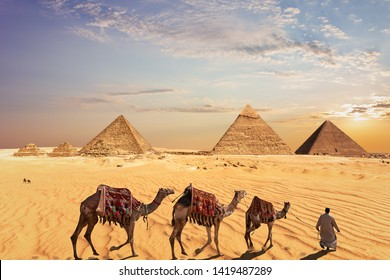 Camel caravan near the Great Pyramids of Giza in Egypt