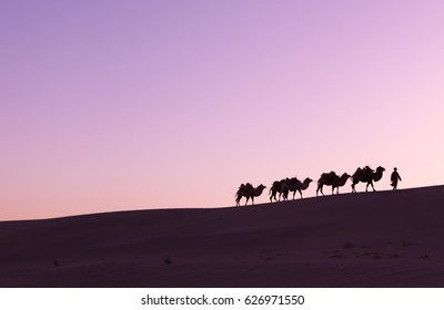 Camel caravan passing sand Desert near the Dunhuang, China, Camel Silhouette