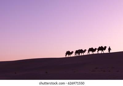 Camel caravan passing sand Desert near the Dunhuang, China, Camel Silhouette