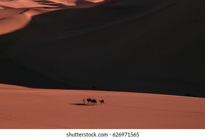 Camel caravan passing sand Desert near the Dunhuang, China,