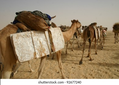 Camel caravan of salt in the Sahara Desert of  Mali, Africa