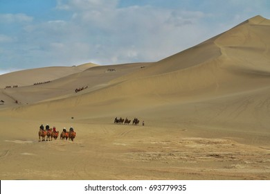 Camel caravan in silk road at Gobi desert Dun-huang,china.
