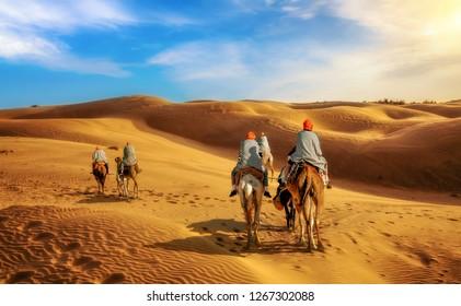 Camel caravan at the Thar desert Jaisalmer Rajasthan at sunset.