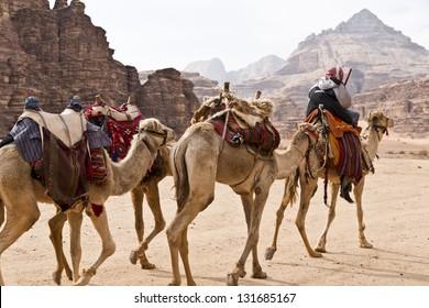 Camel caravan traveling in Wadi Rum,Jordan