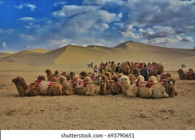 Camel caravans in Gobi desert on the way to silk road.