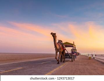 Camel cart at Rann Utsav in Greater Rann of Kutch, Gujarat, India