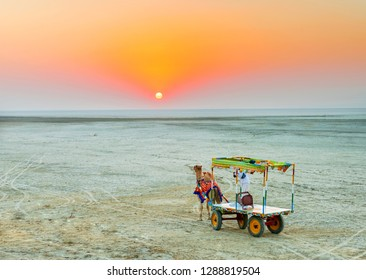A camel cart at White Rann, Greater Rann of Kutch India