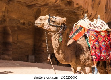 camel desert animal profile portrait photography in heritage touristic site