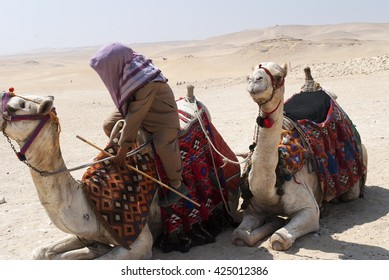 Camel driver with camels in the desert