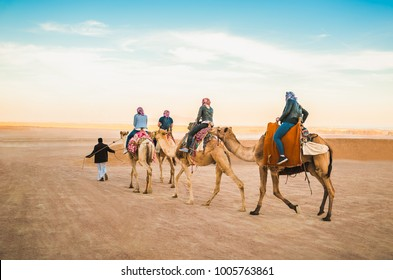 The camel driver drives four camels with tourists in Egypt