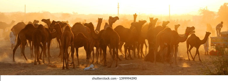 Camel Fair in Pushkar, Rajasthan, India