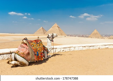 Camel in front of the pyramids,Egypt Cairo