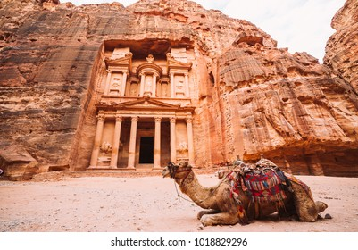 Camel in front of the temple Al-Khazneh. Petra, Jordan