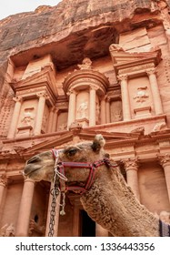 Camel in front of The Treasury, Al-Khazneh, Petra, Ma'an Governorate, Jordan