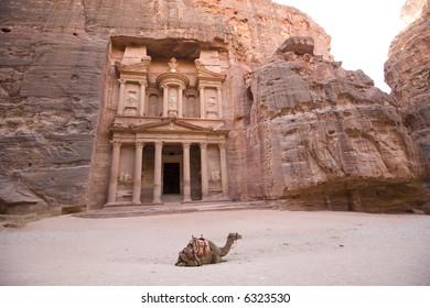 Camel in front of Treasury Petra Jordan