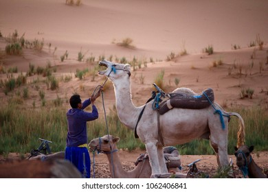 Camel and Man in Dessert