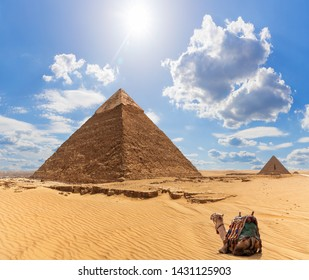 A camel near the Pyramid of Khafre and the Pyramid of Menkaure on the background, Giza, Egypt