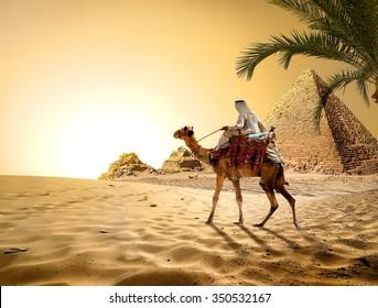 Camel near pyramids in hot desert of Egypt