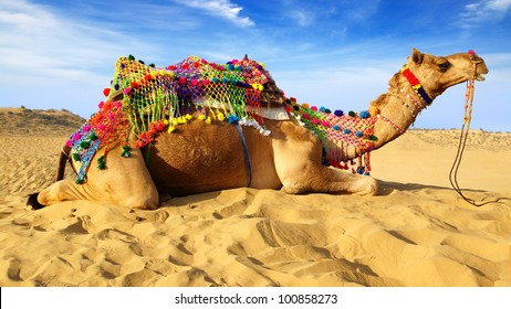 Camel on the background of the blue sky. Bikaner, India