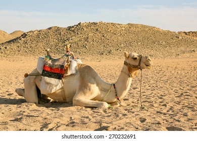 Camel on the background of the blue sky and mounts.