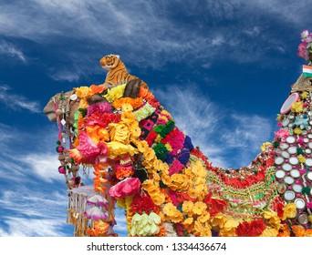 Camel on blue sky background at Bikaner Camel festival in Rajasthan, India