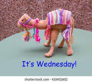 camel with quote - It's Wednesday - hump day