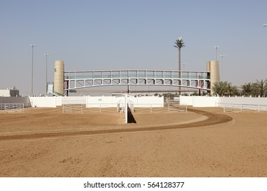 Camel racing cours in Dubai. United Arab Emirates, Middle East