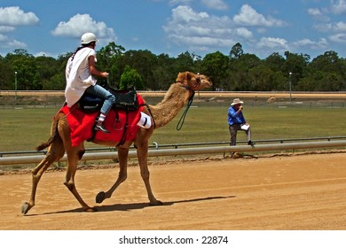 A camel racing towards the finish line.