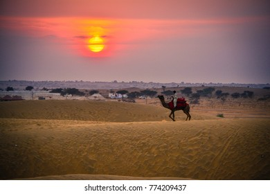 Camel ride in desert at sunset in the sand dunes of India