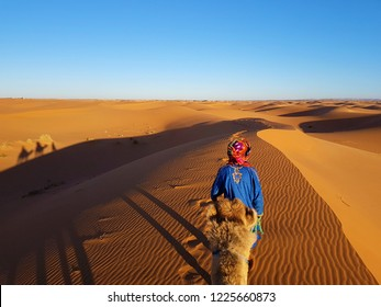 Camel ride in the moroccan sahara with a berber camel Shepherd. Beautiful shadows in the dunes landscape.