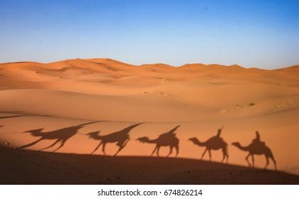 Camel riding in Sahara desert, Morocco