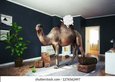 the camel in the room. Photocombination concept idea