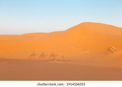 Camel shadow on the sand dune in Sahara Desert, Merzouga, Morocco.