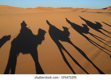 Camel shadows on dune