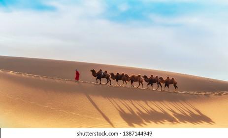 Camel team in the Badain Jaran Desert, Inner Mongolia