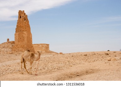 A camel at Temple of Bel , Palmyra, Syria