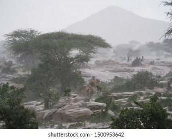 A camel trying to escape the rain in Somaliland