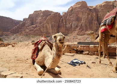Camel in the Wadi Rum Desert (also known as The Valley of the Moon) is a valley cut into the sandstone and granite rock in southern Jordan 60 km to the east of Aqaba