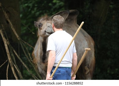 Camel with zookeeper
